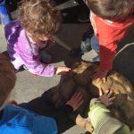 Feb. 11th: Nature Joe's Animal Adventure